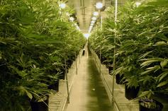 Aurora Cannabis Officially Goes Public On New York Stock Exchange