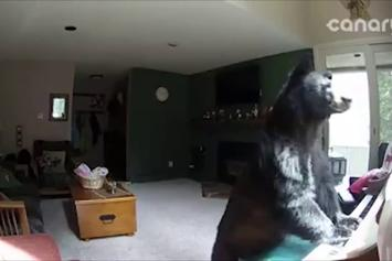 Chill AF: Bear Breaks Into Colorado Home, Plays Piano