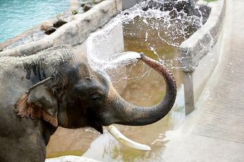 Michael Jackson's Former Elephant Escapes Containment In Florida Zoo