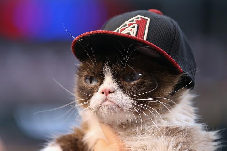 'Grumpy Cat' on the field before the MLB opening day game between the Colorado Rockies and the Arizona Diamondbacks at Chase Field on April 4, 2016 in Phoenix, Arizona